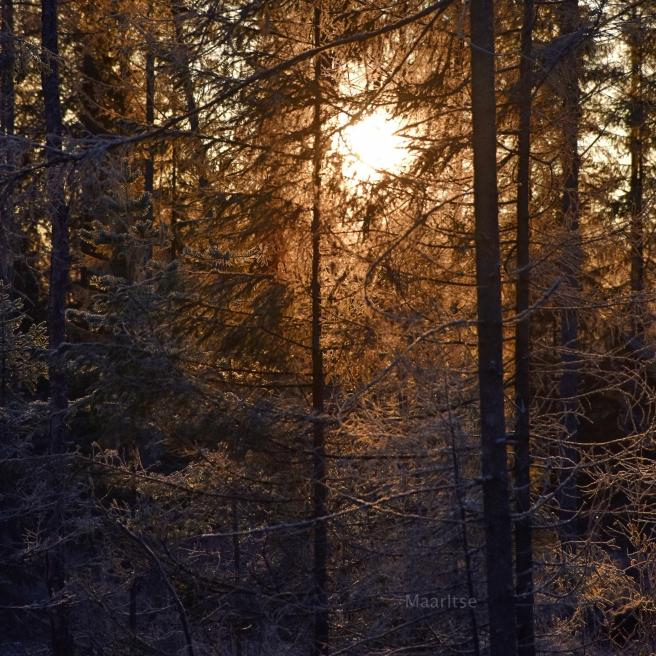 maaritse_syksy_pakkasaamu_auringonnousu