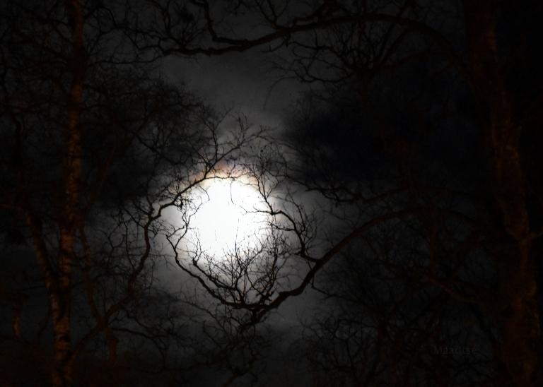 makrotex_joulukuu_maaritse_kuu