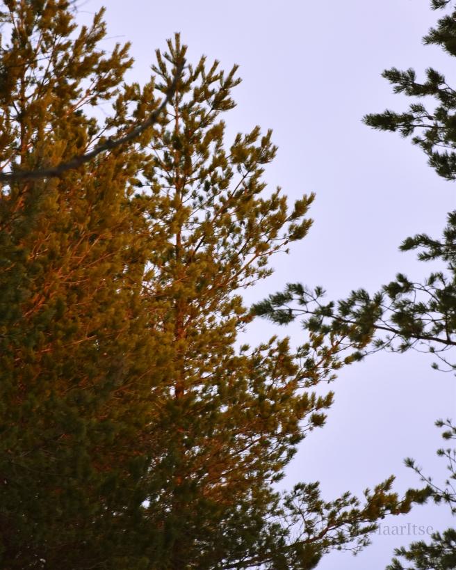makrotex_talven_ihmemaa_auringonpaiste_puunlatvat
