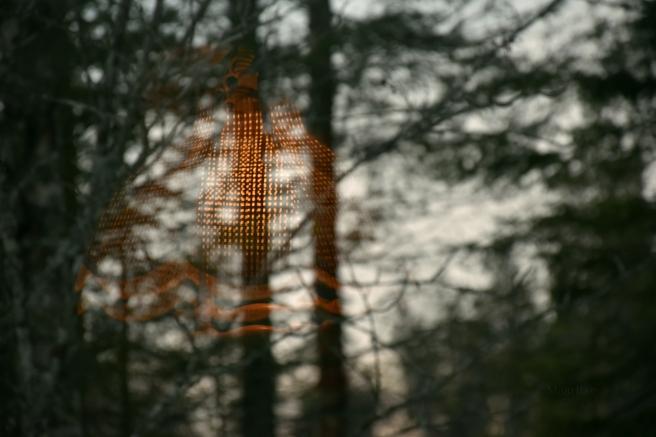makrotex_talven_ihmemaa_lamppu_heijastuu