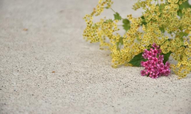 maaritse_kukkia_betonilla