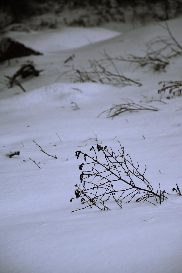 talvinenmaa